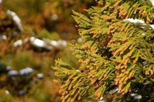 スギの木の写真