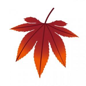 赤く染まったカエデの葉のイラスト