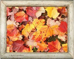 紅葉した葉の写真