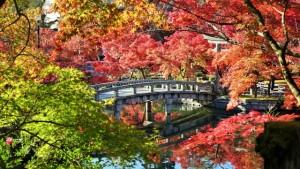 秋の紅葉の風景写真