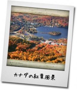 カナダの紅葉風景の写真